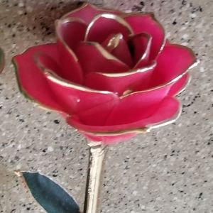 Roses for @bethlynnj22